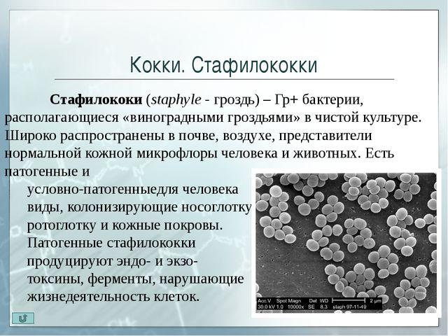 Палочки. Бактерии Бактерии (Bacterium)— микрооганизмы, которые не способны...