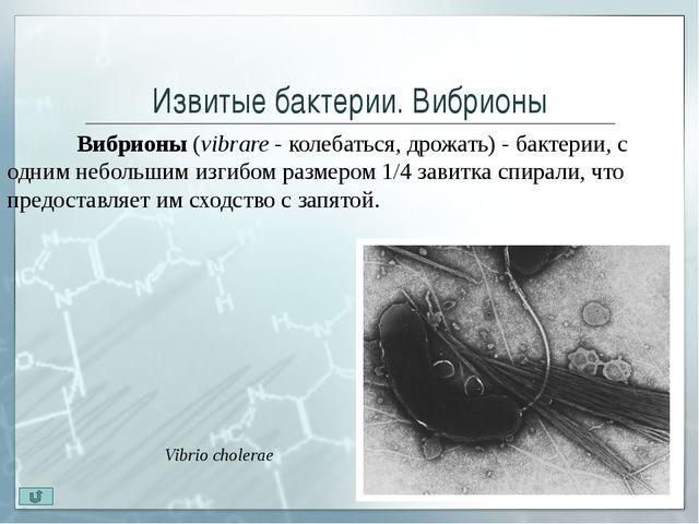 Извитые бактерии. Спирохеты. Трепонемы Род Treponema (trepo - возвращать, n...