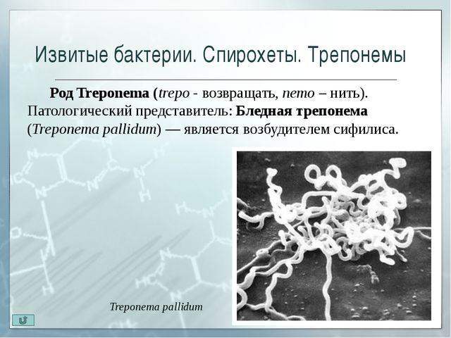 Актиномицеты Актиномицеты(устар. лучистые грибки)—бактерии, имеющие спос...