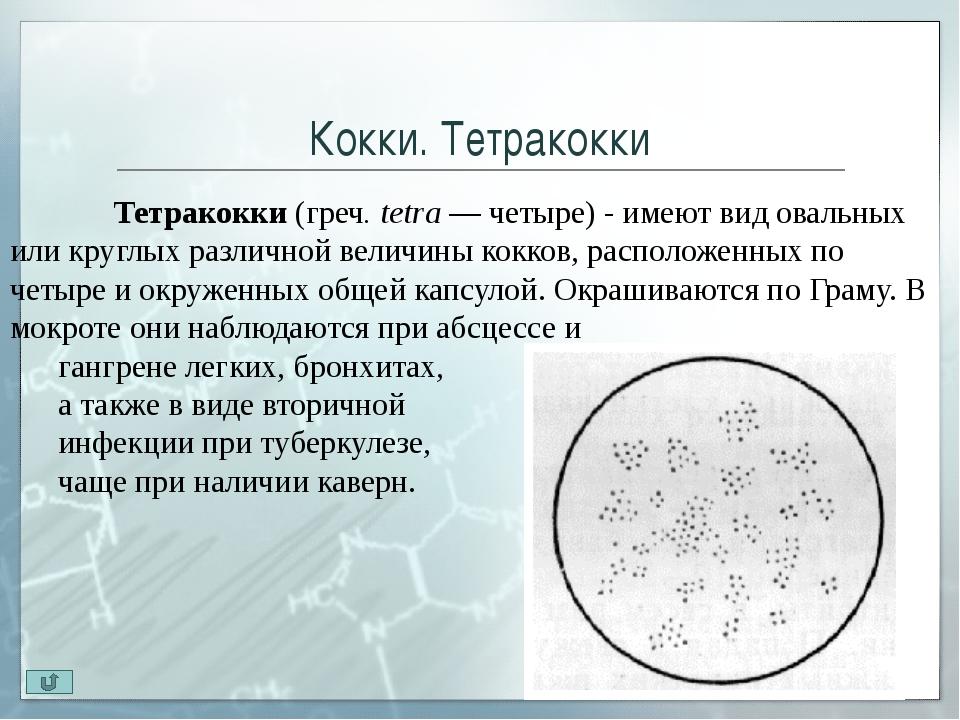 Палочки Палочки – бактерии, различающиеся по размеру и форме концов клетки(...