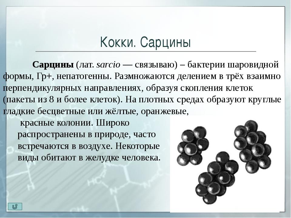 Палочки По способности образовывать споры палочки делятся на 3 группы: Пало...