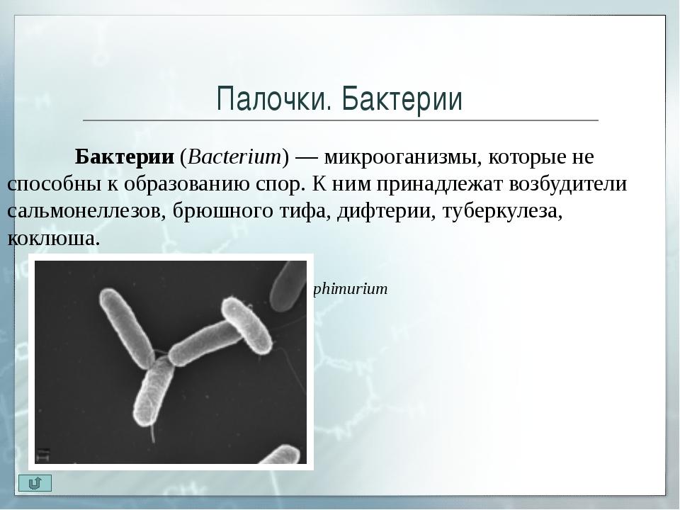 Извитые бактерии Извитые бактерии (Spirillaceae) – имеют характерную изогну...