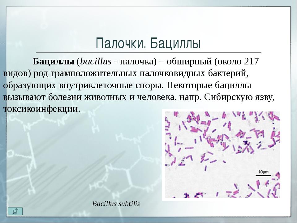 Извитые бактерии. Вибрионы Вибрионы(vibrare - колебаться, дрожать) - бакте...