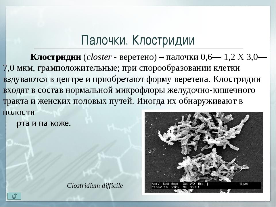 Извитые бактерии. Спириллы Спириллы(spira- завиток, спираль) - бактерии,...