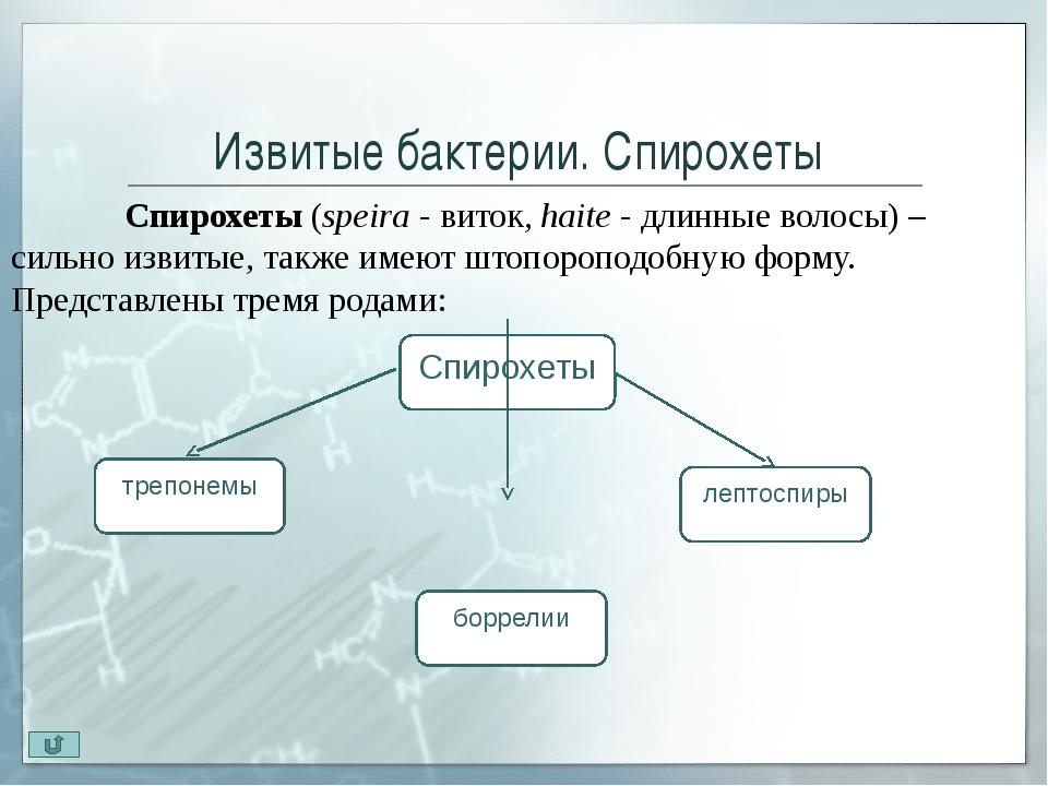 Извитые бактерии. Спирохеты. Лептоспиры Род Leptospira (leptos-тонкий, не...