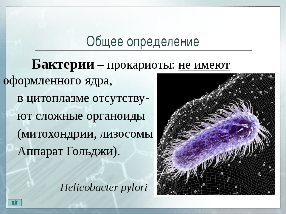 Кокки Кокки (греч. kokkos — зерно, лат. coccus — ягода) – шаровидные бактер...