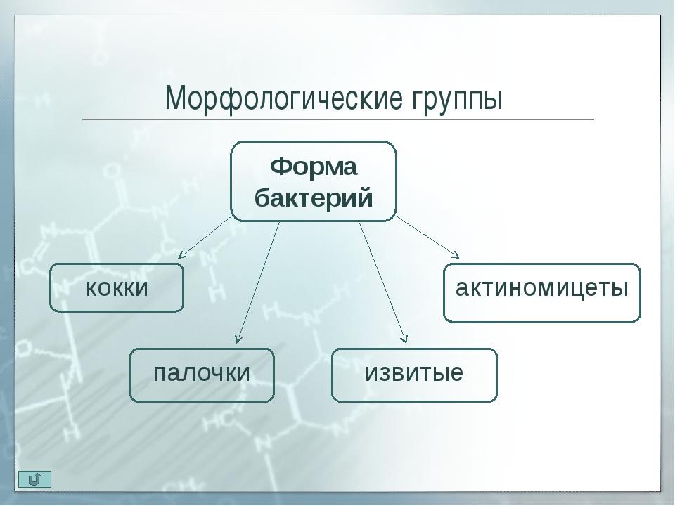 Кокки. Диплококки Диплококки (diploos -двойной) – микроорганизмы располага...