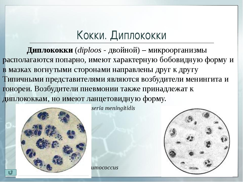 Кокки. Сарцины Сарцины (лат. sarcio — связываю) – бактерии шаровидной формы...