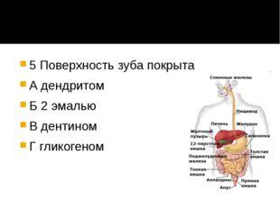 5 Поверхность зуба покрыта А дендритом Б 2 эмалью В дентином Г гликогеном