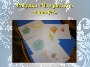 Рисунки «Что растет в огороде?»