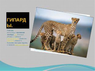 ГИПАРДЫ. Гепа́рд, или(устар.)охотничий леопард(лат.Acinonyx jubatus)— хи