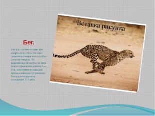 Бег. Гепард- словно создан для скоростного бега. Ни одно животное в мире не с