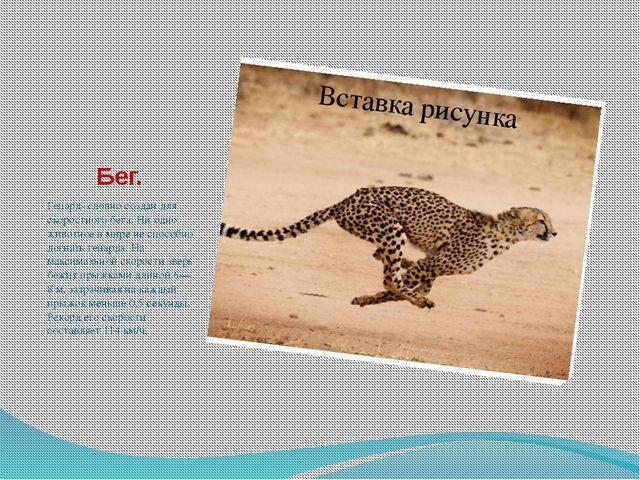 Бег. Гепард- словно создан для скоростного бега. Ни одно животное в мире не с...