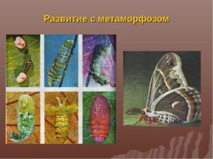 Развитие с метаморфозом