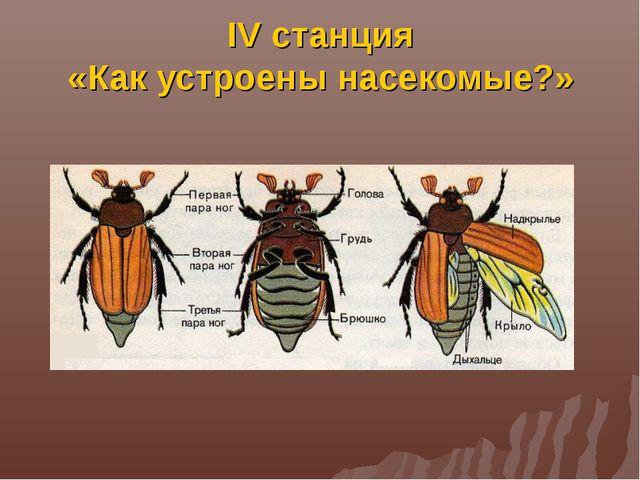 IV станция «Как устроены насекомые?»