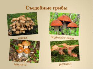 Съедобные грибы рыжики маслята опята подберёзовики