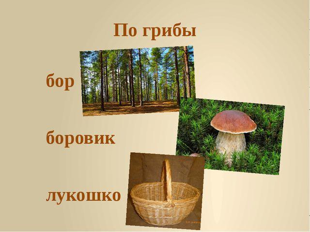 По грибы бор боровик лукошко