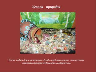 Уголок природы Очень любят дети экспозицию «Клад», представленную множеством