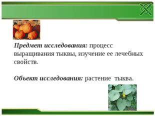 Предмет исследования: процесс выращивания тыквы, изучение ее лечебных свойств