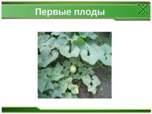 Первые плоды