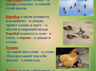 Определение погоды с помощью животных Курица на одной ноге стоит - к стуже. Н