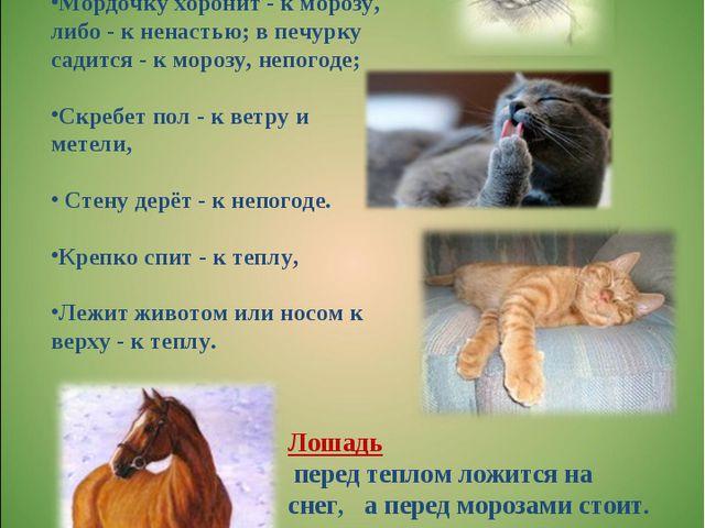 Кошка Лижется - к ненастью. Кошка моется, лижет лапу - к теплой сухой погоде;...