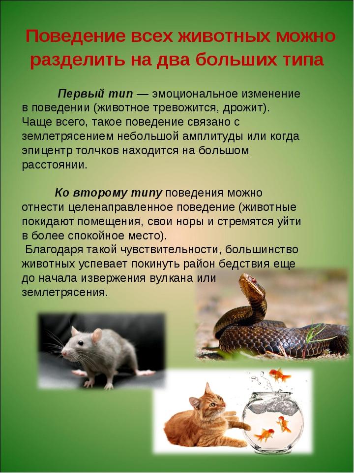 Первый тип — эмоциональное изменение в поведении (животное тревожится, дрожи...