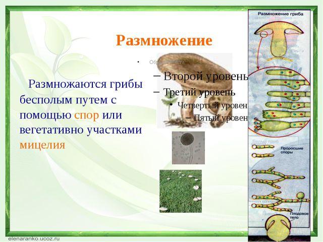 Размножение Размножаются грибы бесполым путем с помощью спор или вегетативно...