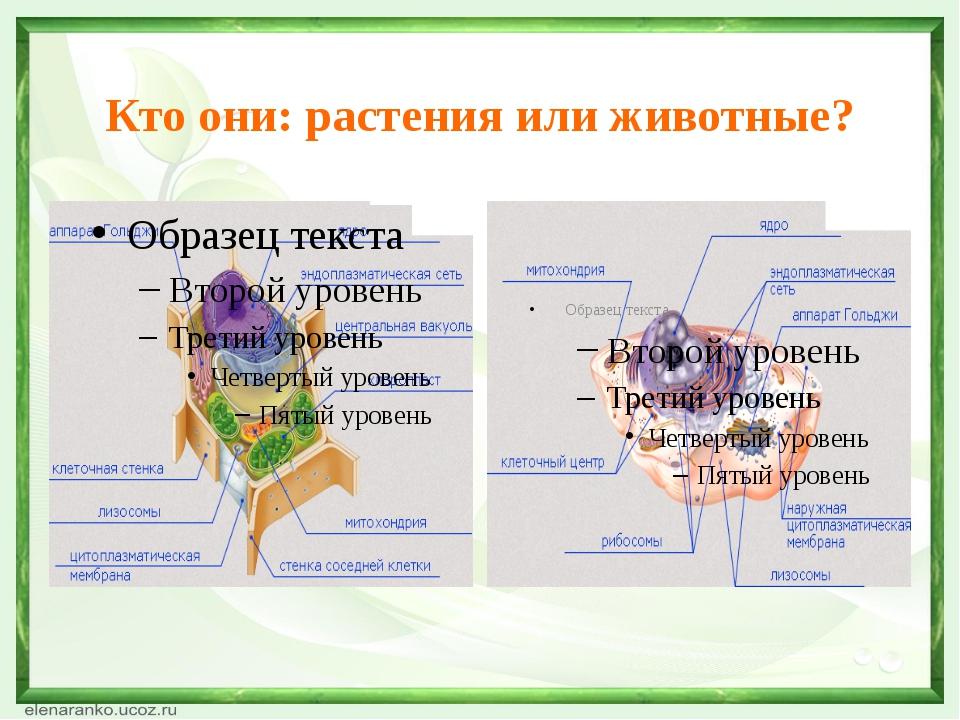 Кто они: растения или животные?
