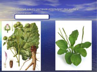 4. Листья, какого растения используют при ушибе и кровотечении? (Лопух, подор