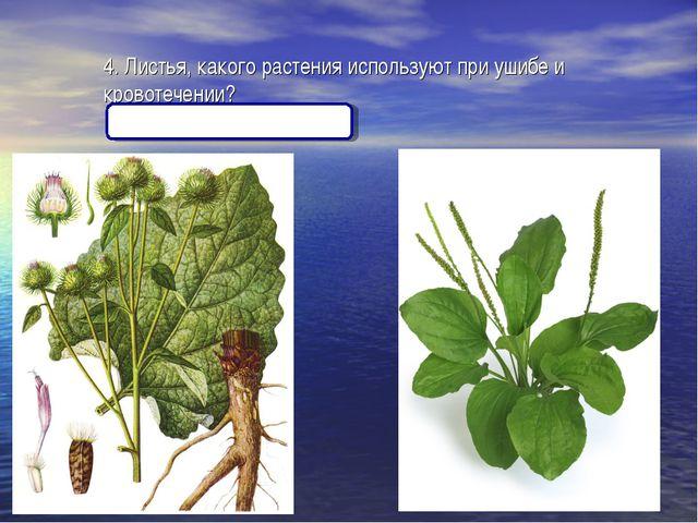 4. Листья, какого растения используют при ушибе и кровотечении? (Лопух, подор...