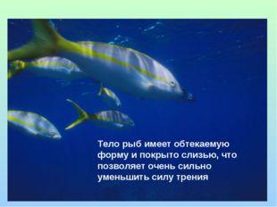 Тело рыб имеет обтекаемую форму и покрыто слизью, что позволяет очень сильно