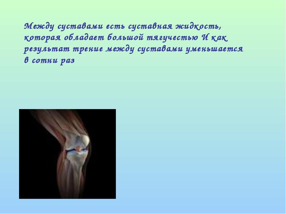 Между суставами есть суставная жидкость, которая обладает большой тягучестью...