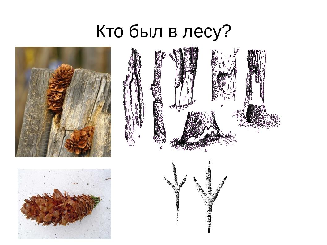 Кто был в лесу?