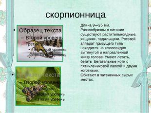 скорпионница Длина 9—25мм. Разнообразны в питании существуют растительноядны
