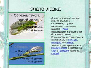 златоглазка Длина тела всего 1 см, но размах крыльев 3 см.Нежные, хрупкие нас