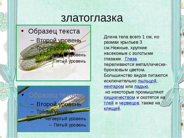 златоглазка Длина тела всего 1 см, но размах крыльев 3 см.Нежные, хрупкие нас...