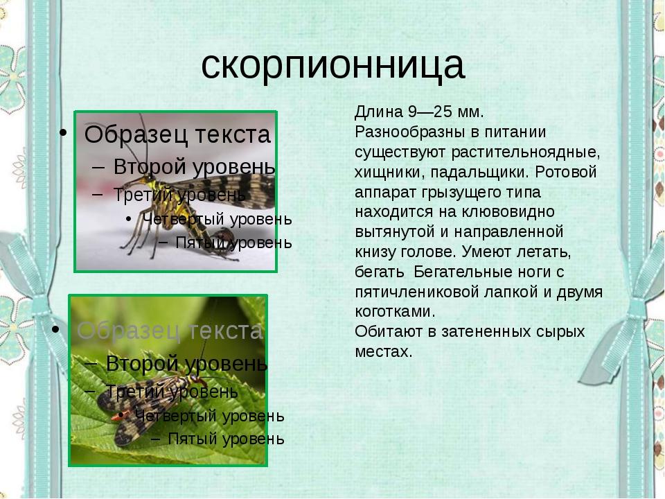 скорпионница Длина 9—25мм. Разнообразны в питании существуют растительноядны...