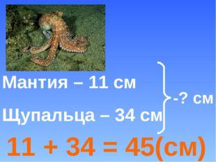 -? см 11 + 34 = 45(см) Мантия – 11 см Щупальца – 34 см