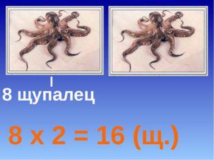 8 щупалец 8 х 2 = 16 (щ.)