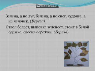 Русская берёза. Зелена, а не луг, белена, а не снег, кудрява, а не человек. (