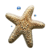 C:\Users\Анюта\Desktop\осень 555\star.png