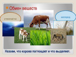 Назови, что корова поглощает и что выделяет. Обмен веществ углекислый газ кис