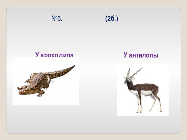 №6. (2б.) У крокодила У антилопы