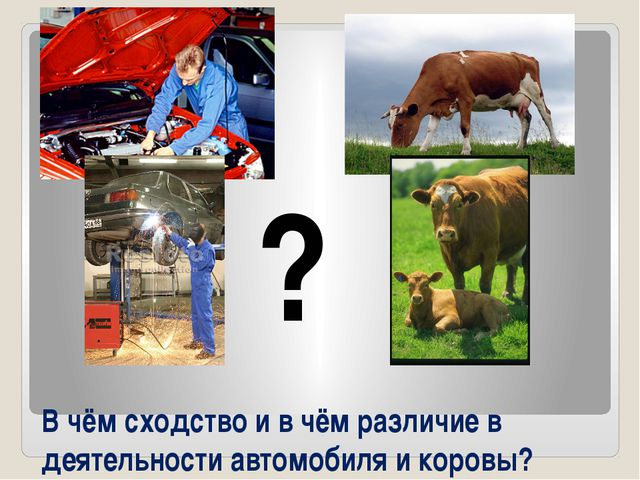 ? В чём сходство и в чём различие в деятельности автомобиля и коровы?