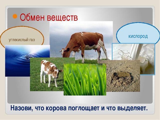 Назови, что корова поглощает и что выделяет. Обмен веществ углекислый газ кис...