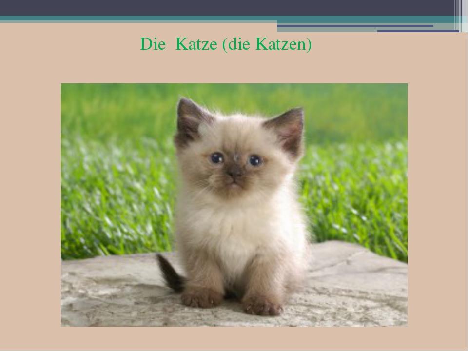 Die Katze (die Katzen)