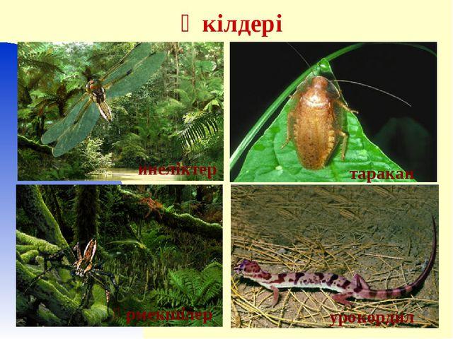 Өкілдері кузнечик өрмекшілер инеліктер таракан урокордил