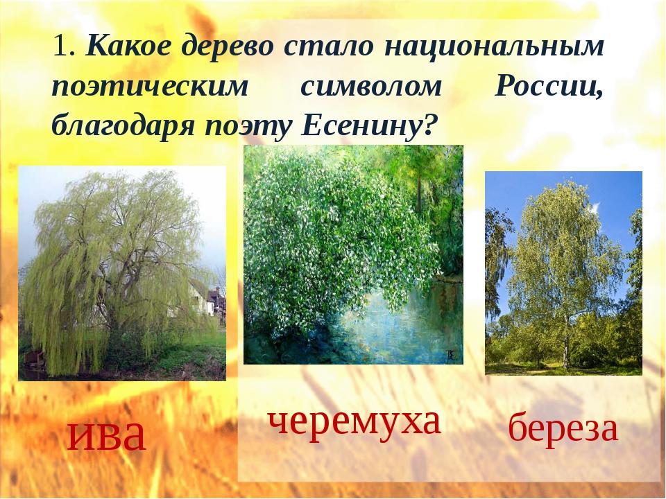 1. Какое дерево стало национальным поэтическим символом России, благодаря поэ...