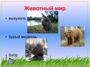 Животный мир выхухоль бурый медведь бобр